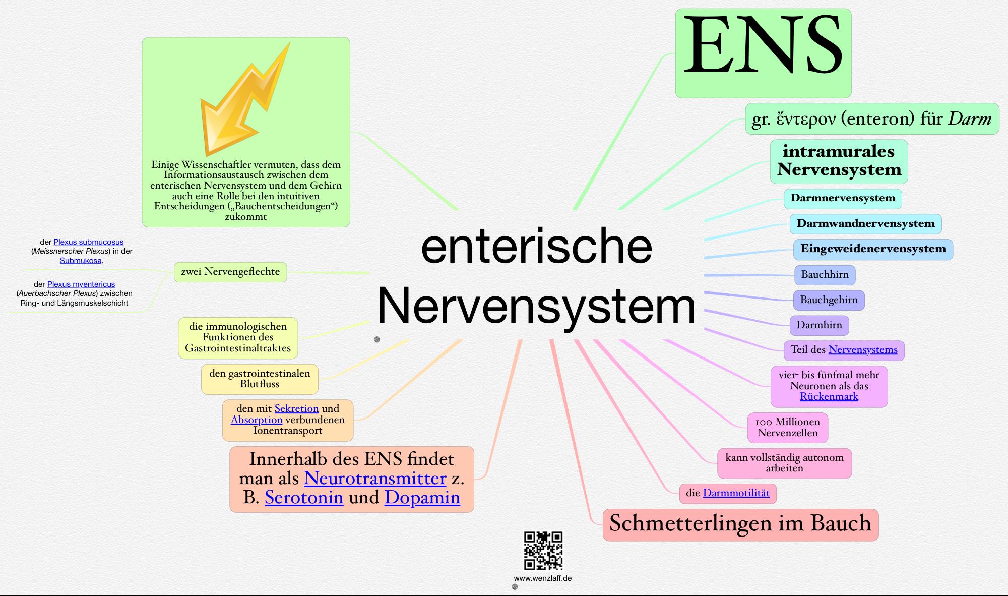 Nervensystem – Das Kleinhirn (lat. Cerebellum)